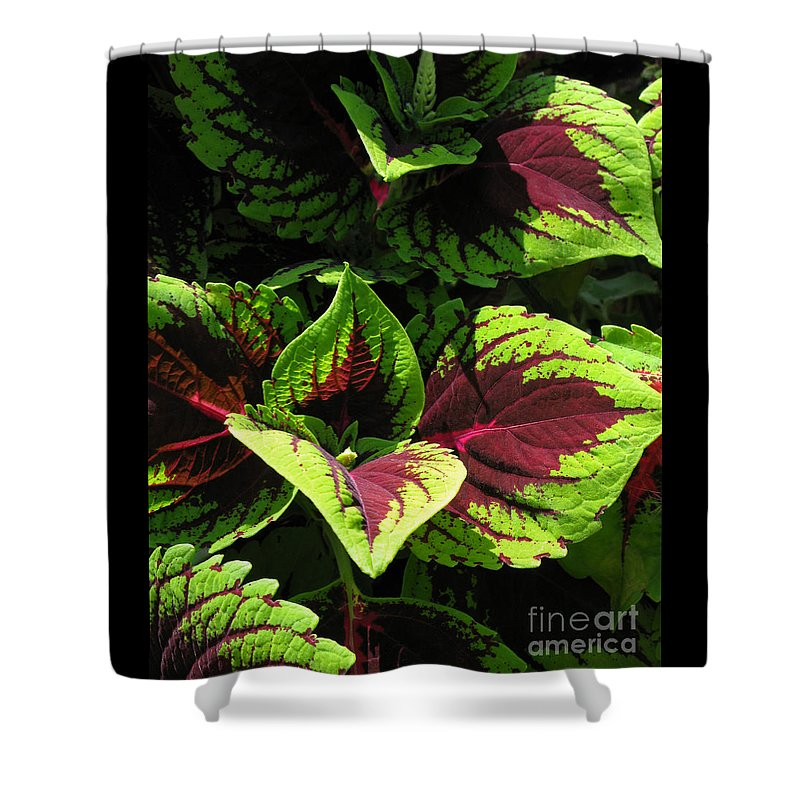 Coleus Shower Curtain featuring the photograph Show Off by Ann Horn