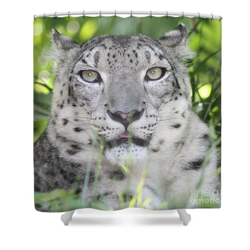 Snow Leopard Shower Curtain featuring the photograph Snow Leopard by John Telfer