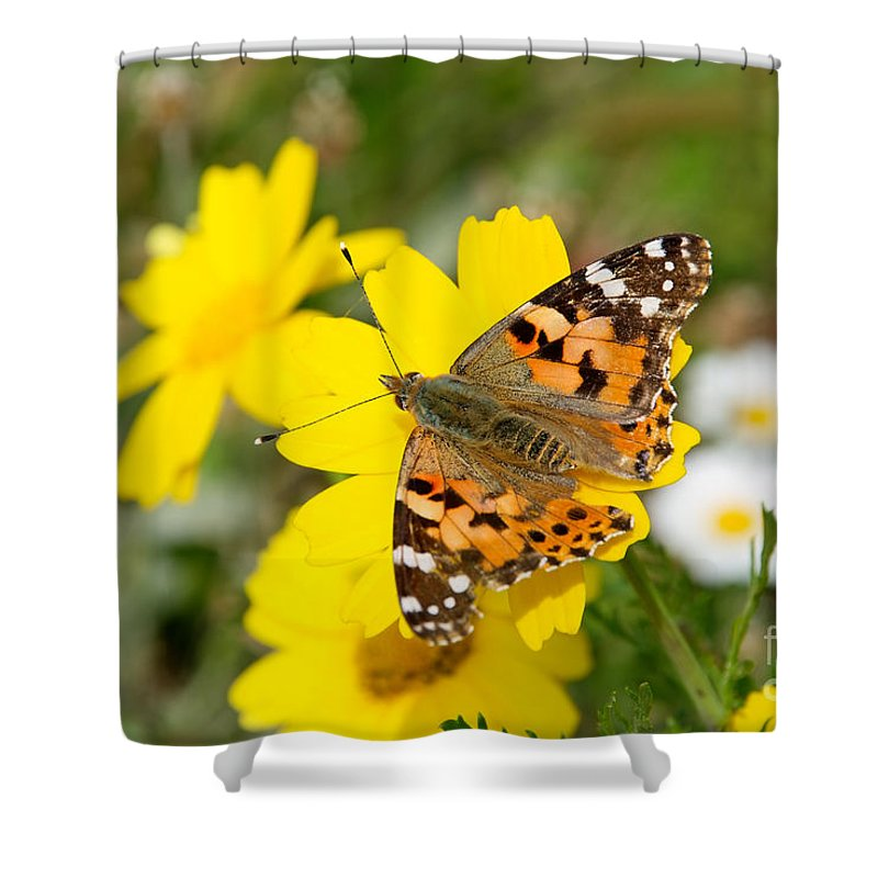 Hydra; Idra; Greece; Hellas; Greek; Island; Hellenic; Argosaronic; Saronic; Gulf; Butterfly; Insect; Daisy; Daisies; Crown Daisies; Yellow Shower Curtain featuring the photograph Springtime In Hydra Island by George Atsametakis