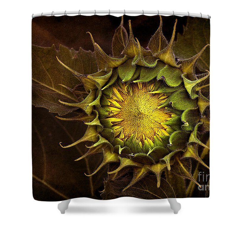 Sunflower Seeds Shower Curtains
