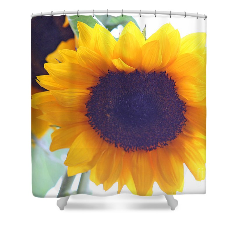 Sunflower Shower Curtain featuring the photograph Sunflower by Karen Adams