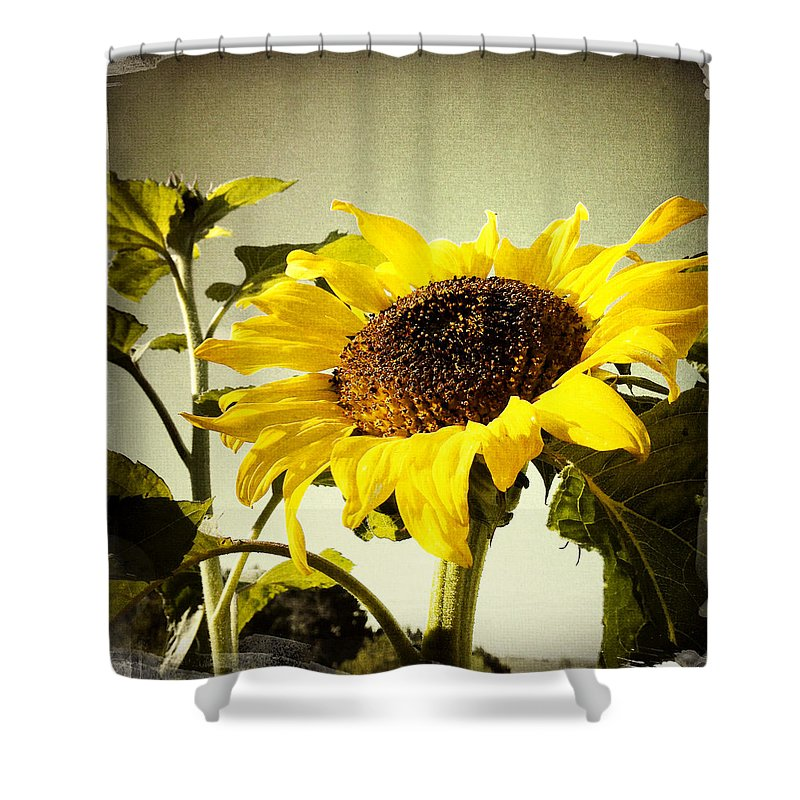Bloom Shower Curtain featuring the photograph Sunflower by Les Cunliffe