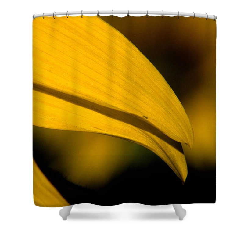 Sunflower Shower Curtain featuring the photograph Sunflower Petals by Sharon Elliott