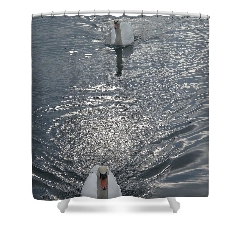 Swan Shower Curtain featuring the photograph 2 Swan by Robert Nickologianis
