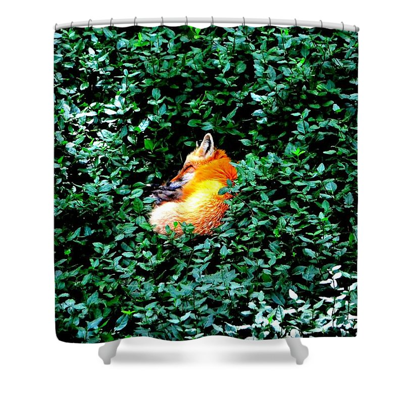 Fox Shower Curtain featuring the photograph Sweet Slumber by Deena Stoddard