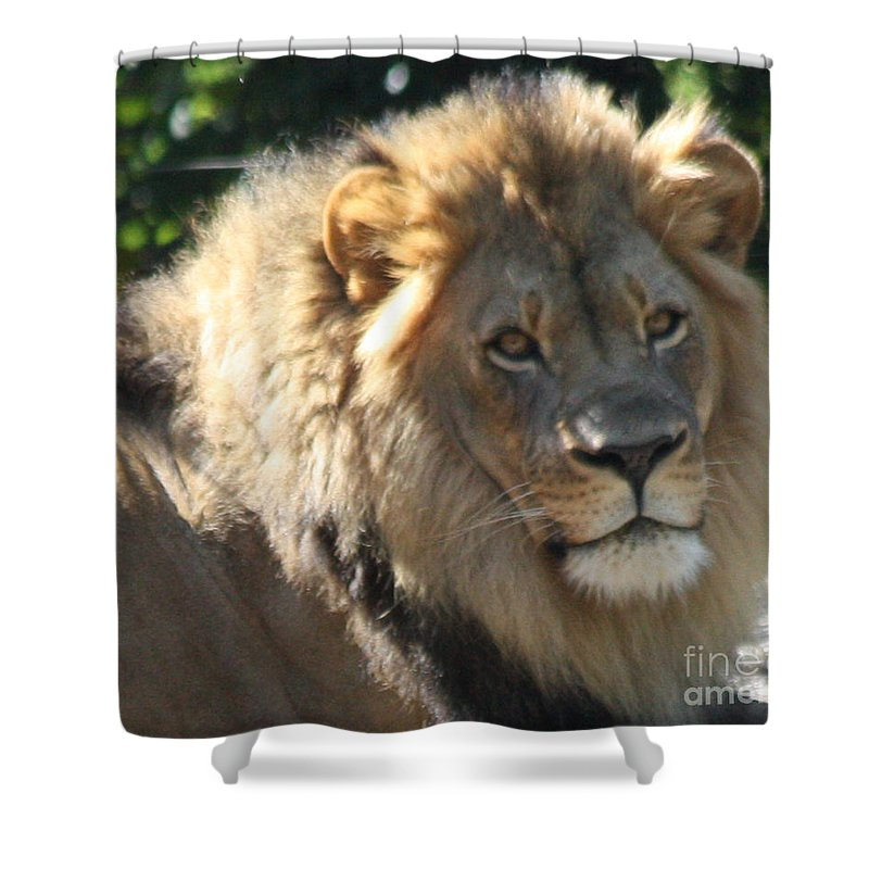 The King Of The Jungle Shower Curtain featuring the photograph The King Of The Jungle by John Telfer