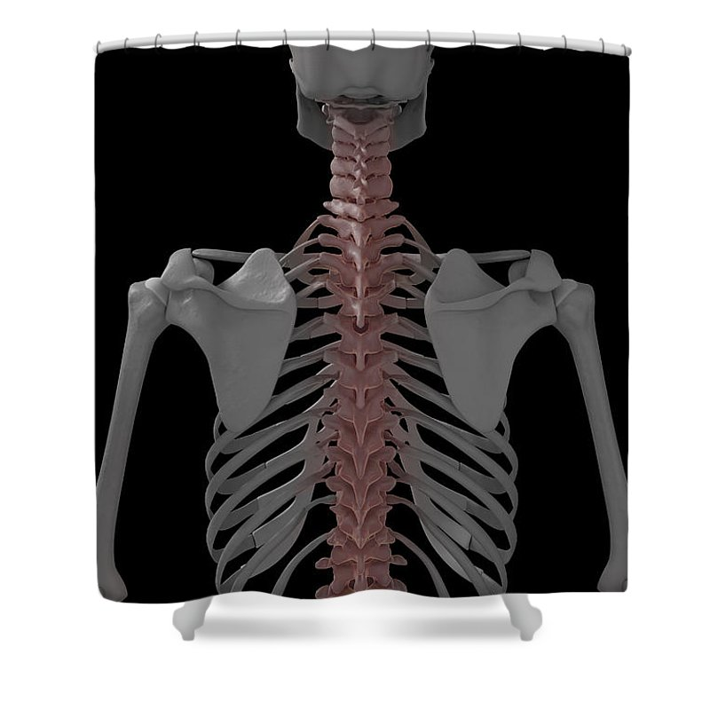 3d Visualisation Shower Curtain featuring the photograph The Spine by Science Picture Co