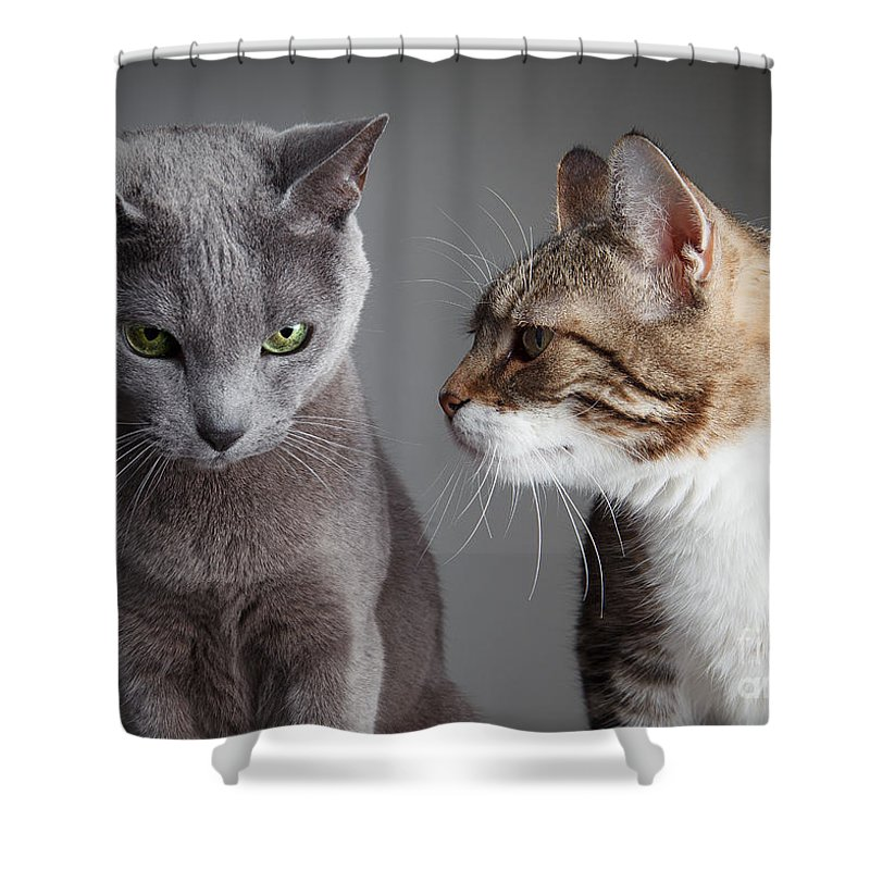 Cat Shower Curtain Featuring The Photograph Two Cats By Nailia Schwarz