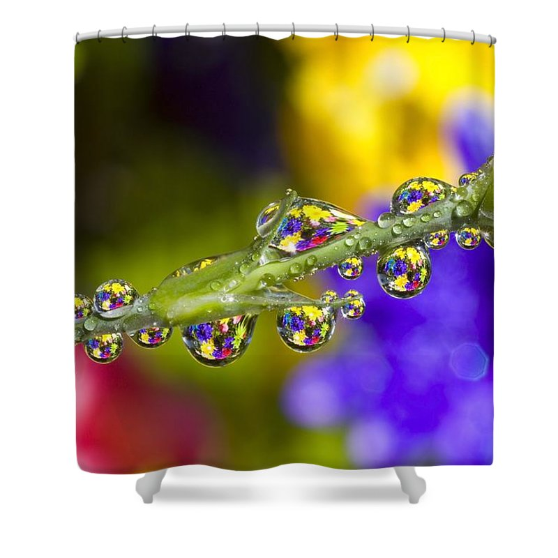 Budding Shower Curtain featuring the photograph Water Drops On A Flower Stem by Craig Tuttle