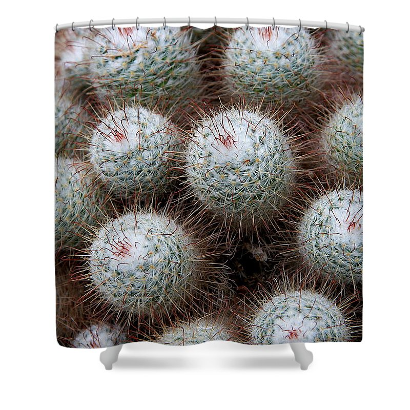 Cactus Shower Curtain featuring the photograph White Bearded by Christiane Schulze Art And Photography