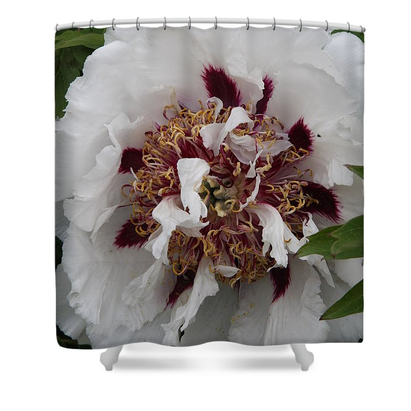 Peonies Shower Curtain featuring the photograph White Peony by Christiane Schulze Art And Photography