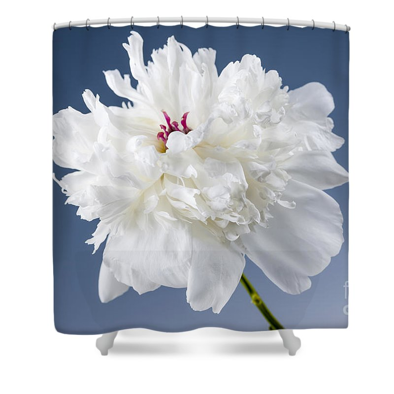 Peony Shower Curtain featuring the photograph White Peony Flower by Elena Elisseeva