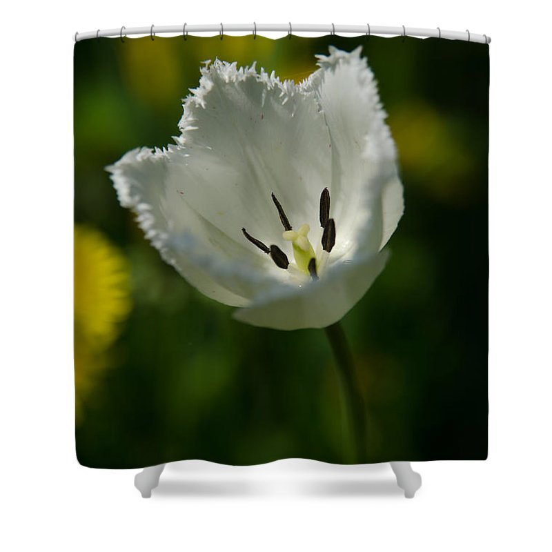 Beautiful Shower Curtain featuring the photograph White Tulip On The Green Background by Michael Goyberg