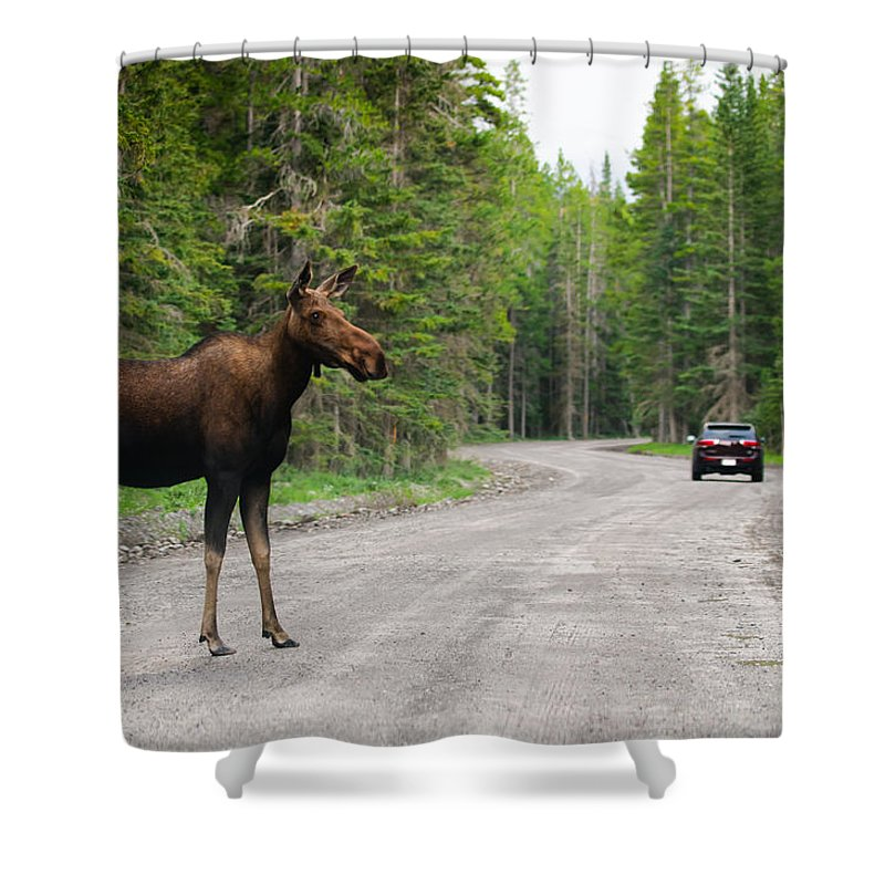 Alberta Shower Curtain featuring the photograph Wild Moose by Brandon Smith