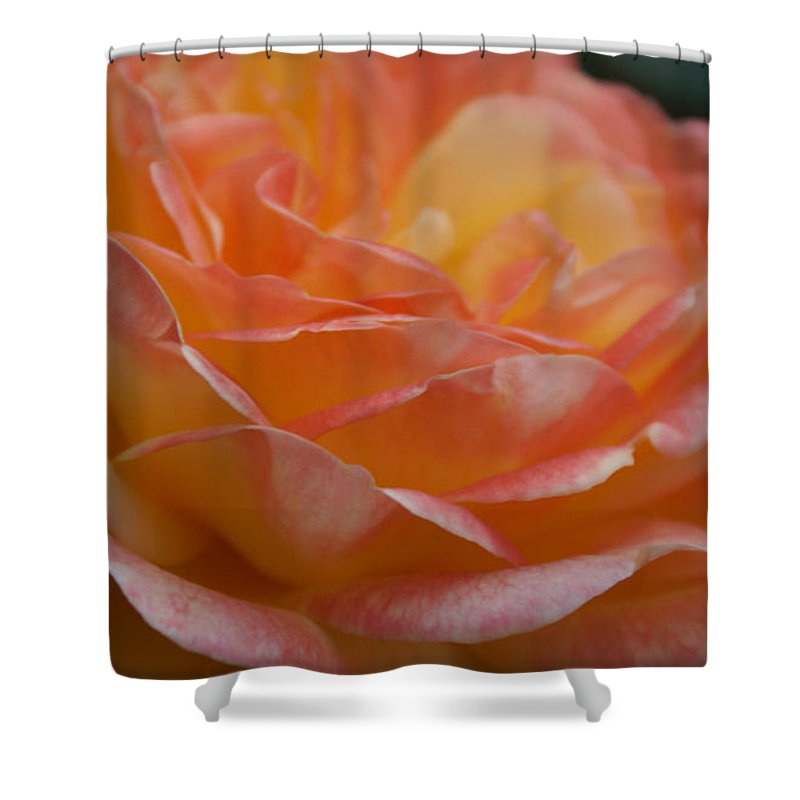 Yellow And Hot Pink Rose Shower Curtain featuring the photograph Yellow And Hot Pink Rose I by Jacqueline Russell