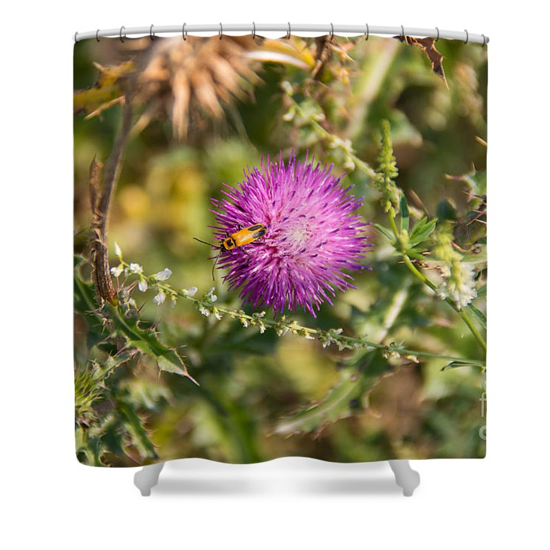 South Dakota Shower Curtain featuring the photograph 21665 by M Dale