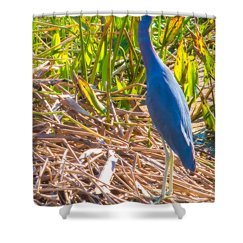 susan Molnar Shower Curtain featuring the photograph A Little Blue by Susan Molnar