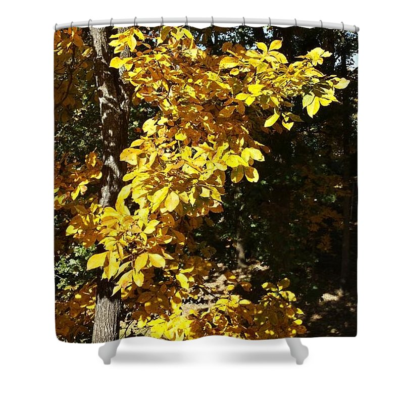 Fall Shower Curtain featuring the photograph Autumn Color by Kenny Glover