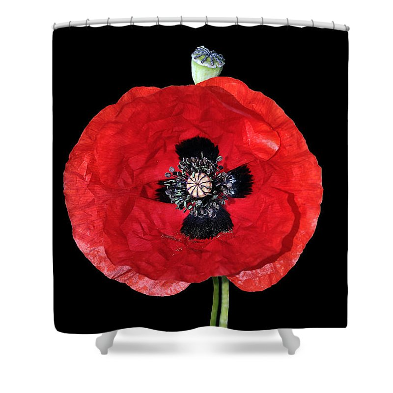 Poppy; Poppies; Corn Poppy; Papaver Rhoeas; Red; Flower; Flowers; Wild; Plant; Spring; Springtime; Season; Nature; Natural; Natural Environment; Natural World; Flora; Bloom; Blooming; Blossom; Blossoming; Color; Colour; Colorful; Colourful; Earth; Environment; Ecological; Ecology; Country; Landscape; Countryside; Scenery; Macro; Close-up; Detail; Details; Greece; Hellas; Greek; Hellenic; Attica; Attika; Attiki; Europe; European; Beauty; Outdoor; Outside; Photograph; Photography; Digital Art Shower Curtain featuring the digital art Poppy Flower by George Atsametakis