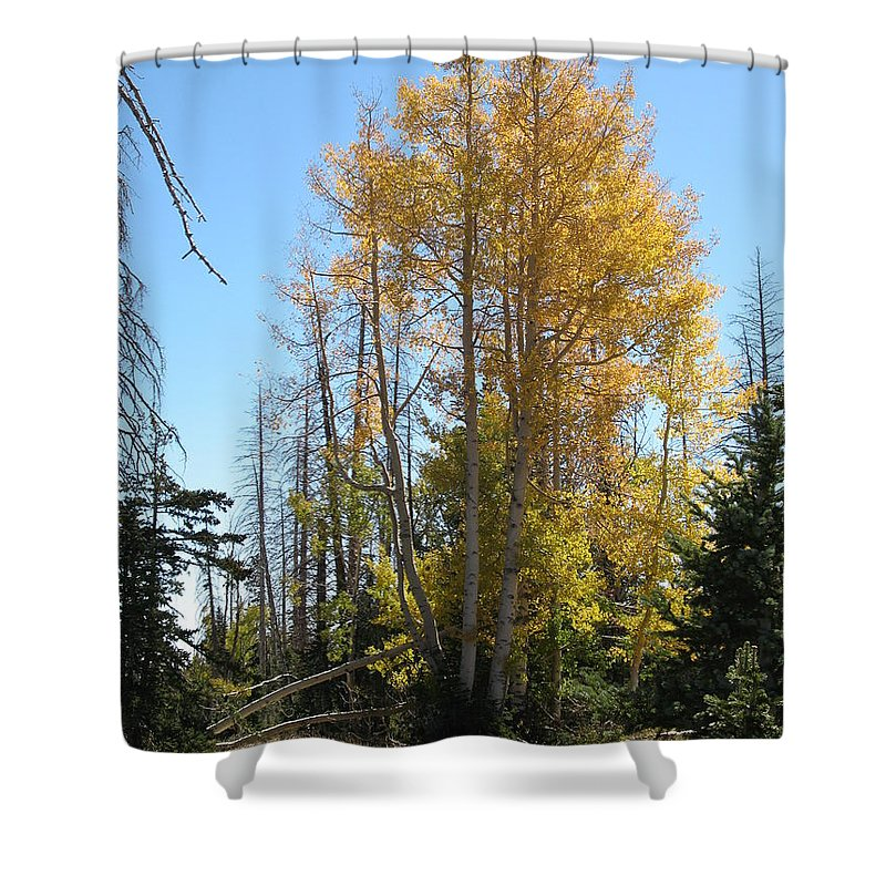 Aspen Trees Shower Curtain featuring the photograph Aspen Trees by Christiane Schulze Art And Photography