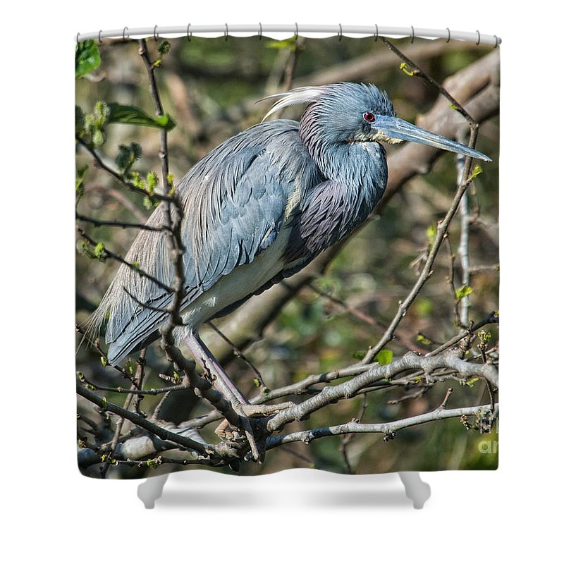 Shower Curtain featuring the photograph At Rest by Claudia Kuhn