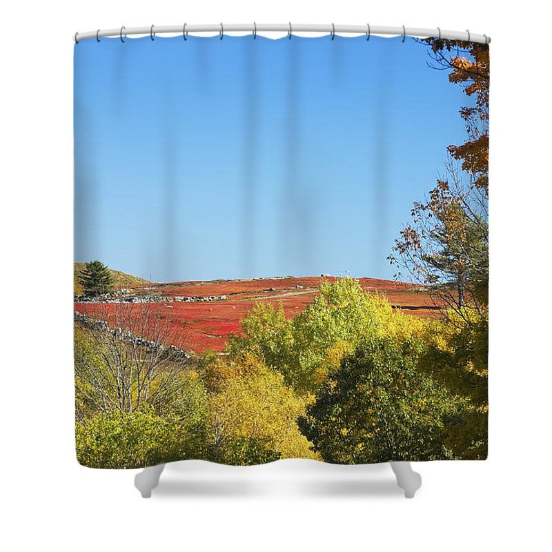 Blueberry Shower Curtain featuring the photograph Autumn Colors In Maine Blueberry Field And Forest by Keith Webber Jr