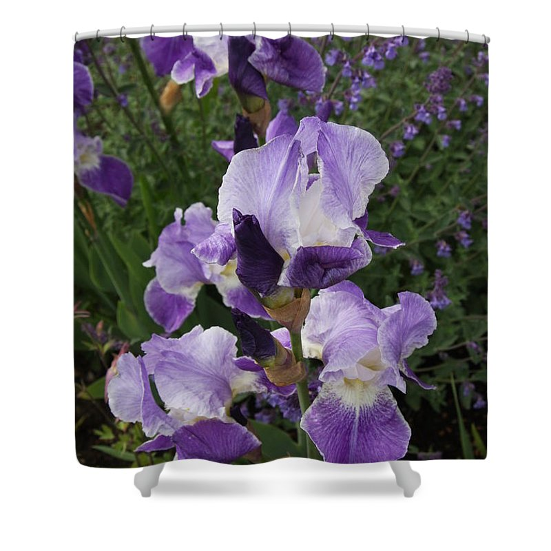 Iris Shower Curtain featuring the photograph Blue Iris by Christiane Schulze Art And Photography