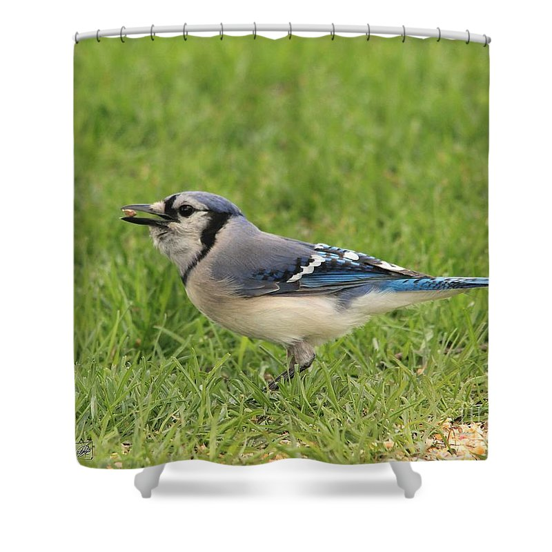 Mccombie Shower Curtain featuring the photograph Blue Jay by J McCombie