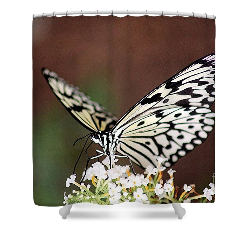 Butterfly Shower Curtain featuring the photograph Butterfly by Diane Greco-Lesser