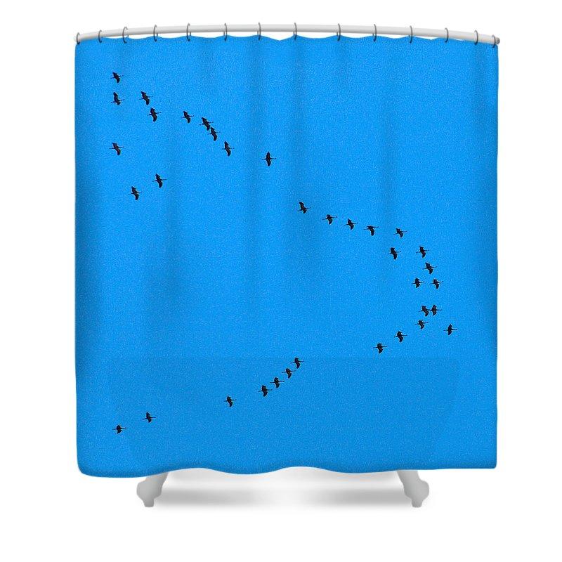 Lehto Shower Curtain featuring the photograph Eurasian Cranes by Jouko Lehto