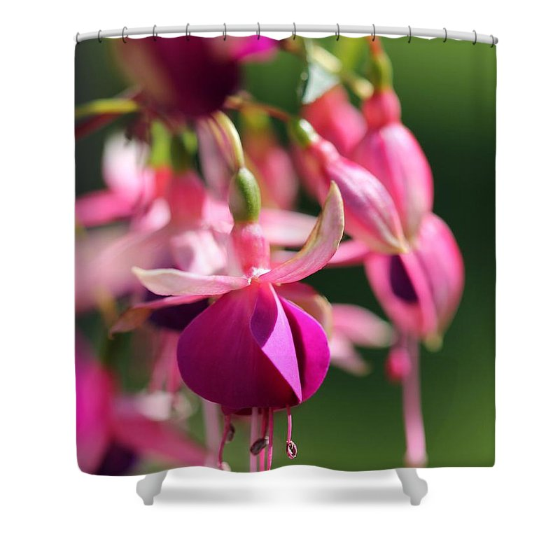 Mccombie Shower Curtain featuring the photograph Fuchsia Named Lambada by J McCombie