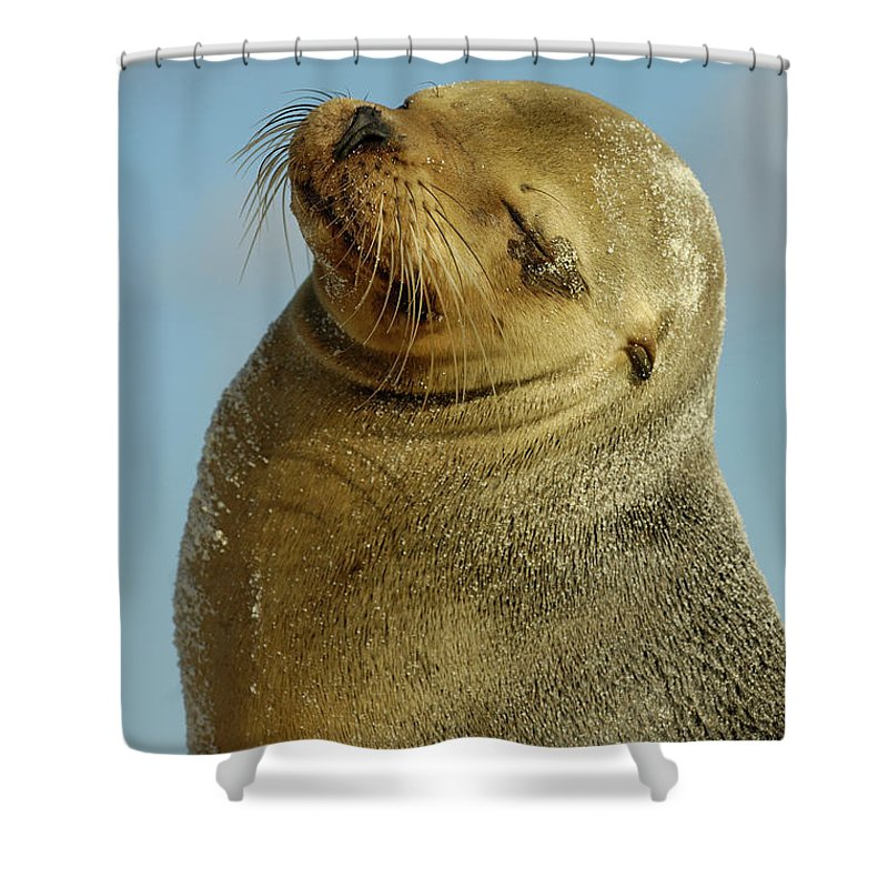 Color Image Shower Curtain featuring the photograph Galapagos Sea Lion Zalophus Wollebaeki by Pete Oxford