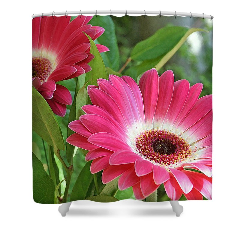 Gorgeous Gerbers Shower Curtain featuring the painting Gorgeous Gerbers by Ellen Henneke