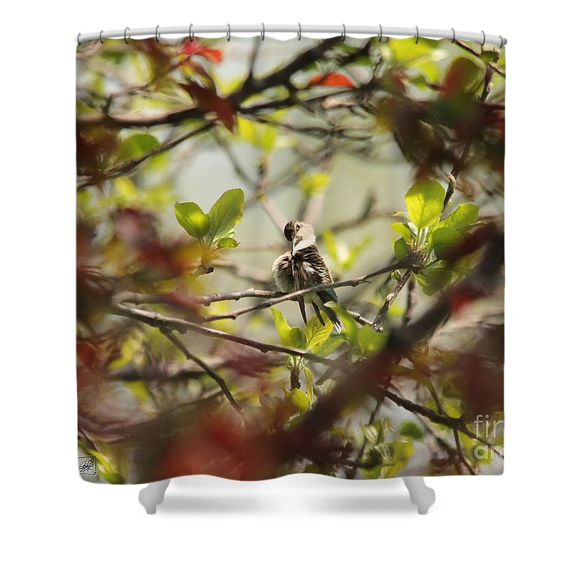 Mccombie Shower Curtain featuring the photograph Hummingbird In Spring by J McCombie