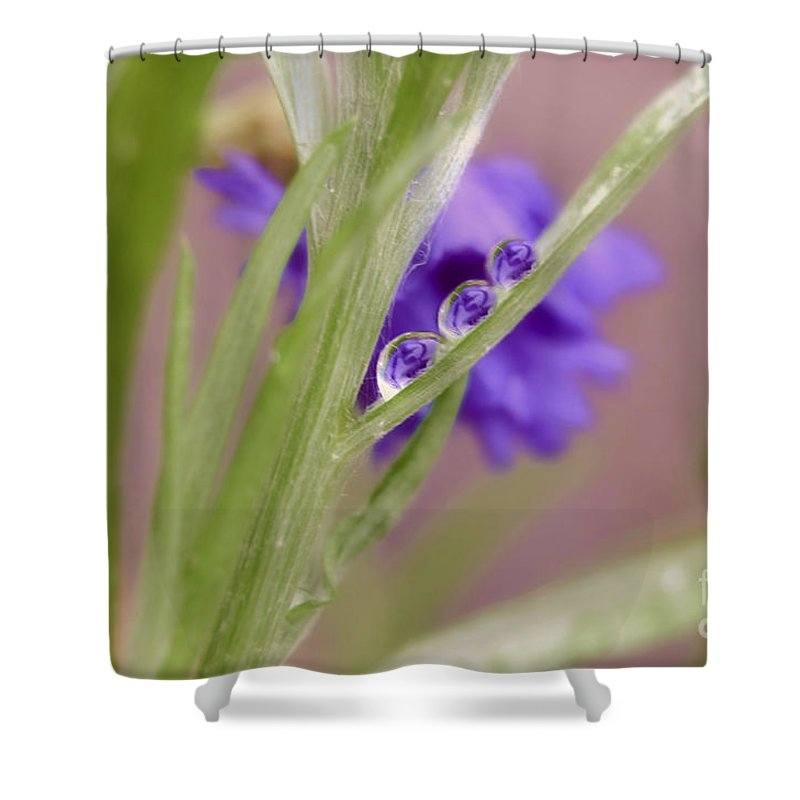 Macro Rain Drop Shower Curtain featuring the photograph 3 In A Row Reflection Rain Drops by Peggy Franz