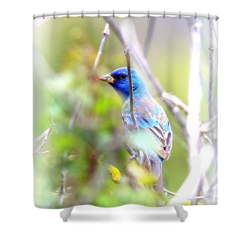 Indigo Bunting Shower Curtain featuring the photograph Indigo Bunting by Travis Truelove