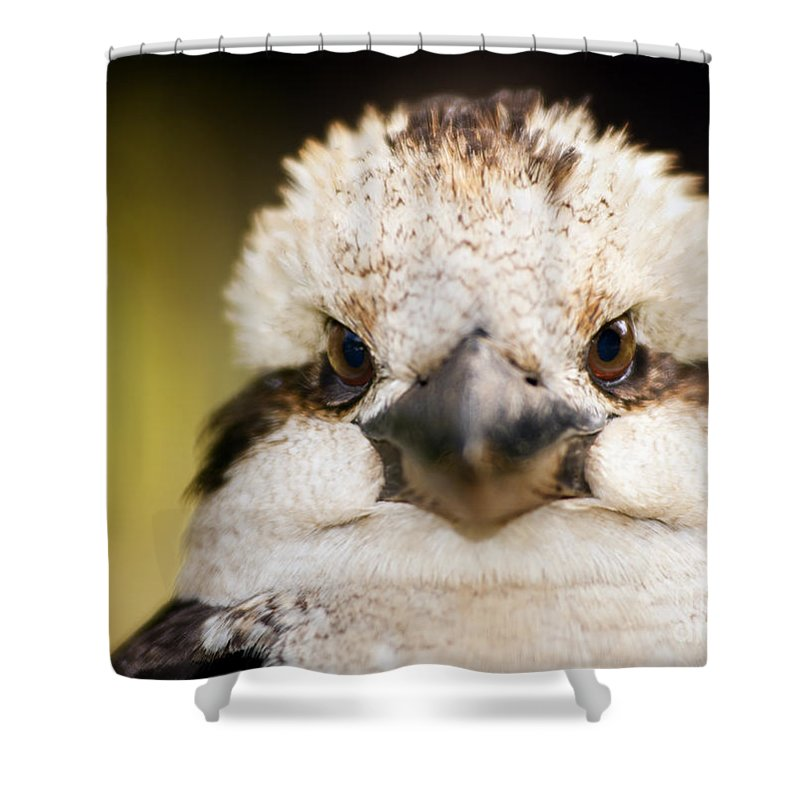 Australia Shower Curtain featuring the photograph Kookaburra by Tim Hester