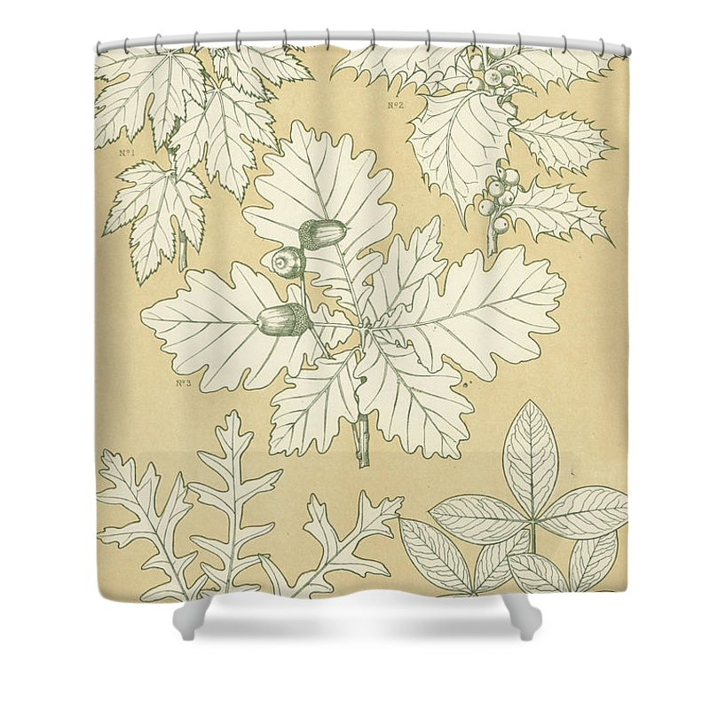 Ornament; Ornamentation; Design; Pattern; Historical; Plates; Leaves; Nature; Botany; Botanical; Leaf; Natural Shower Curtain featuring the painting Leaves From Nature by English School