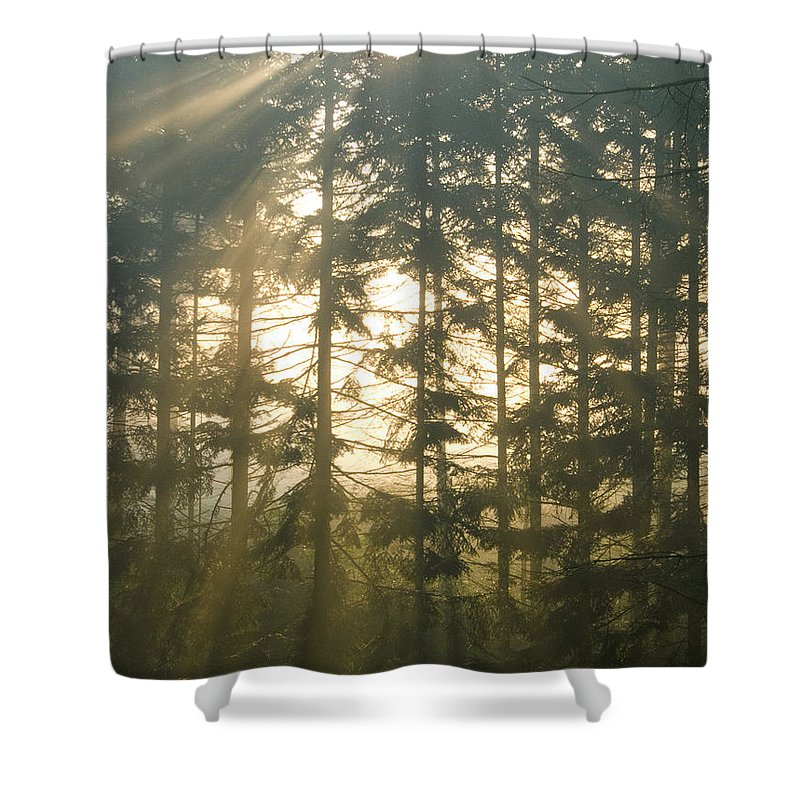 Nature Shower Curtain featuring the photograph Light In The Forest by Daniel Csoka