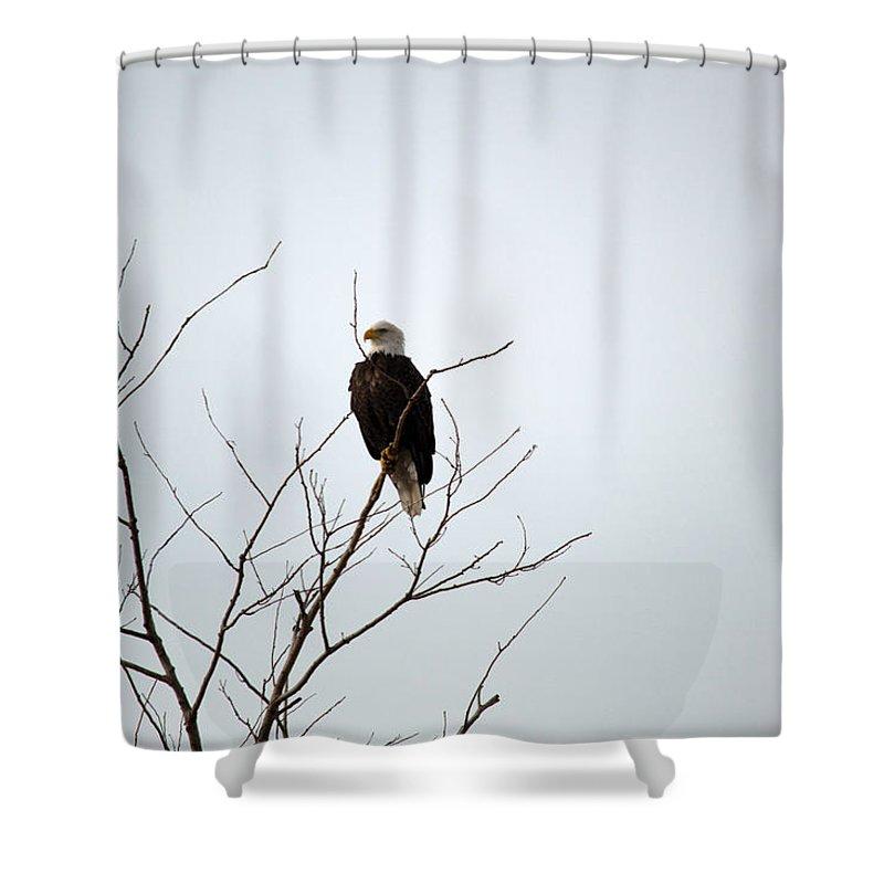 Bald Eagle Shower Curtain featuring the photograph Majestic by Linda Kerkau