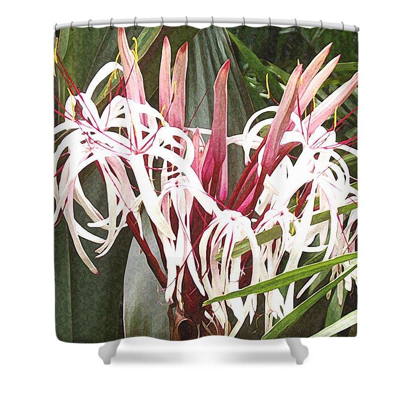 Spider Lilies Shower Curtains