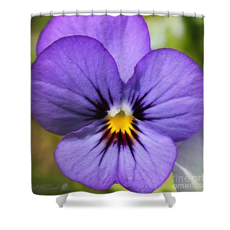 Mccombie Shower Curtain featuring the painting Viola Named Sorbet Blue Heaven Jump-up by J McCombie