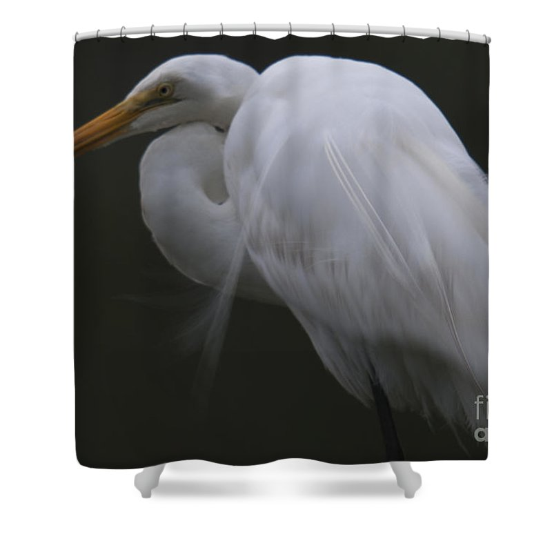 White Heron Shower Curtain featuring the photograph White Heron Portrait by Dale Powell