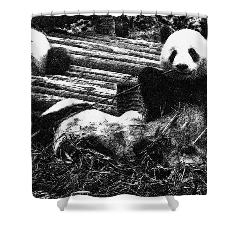 Asia Shower Curtain featuring the digital art 3722-panda - Advanced Pencil Sketch by David Lange