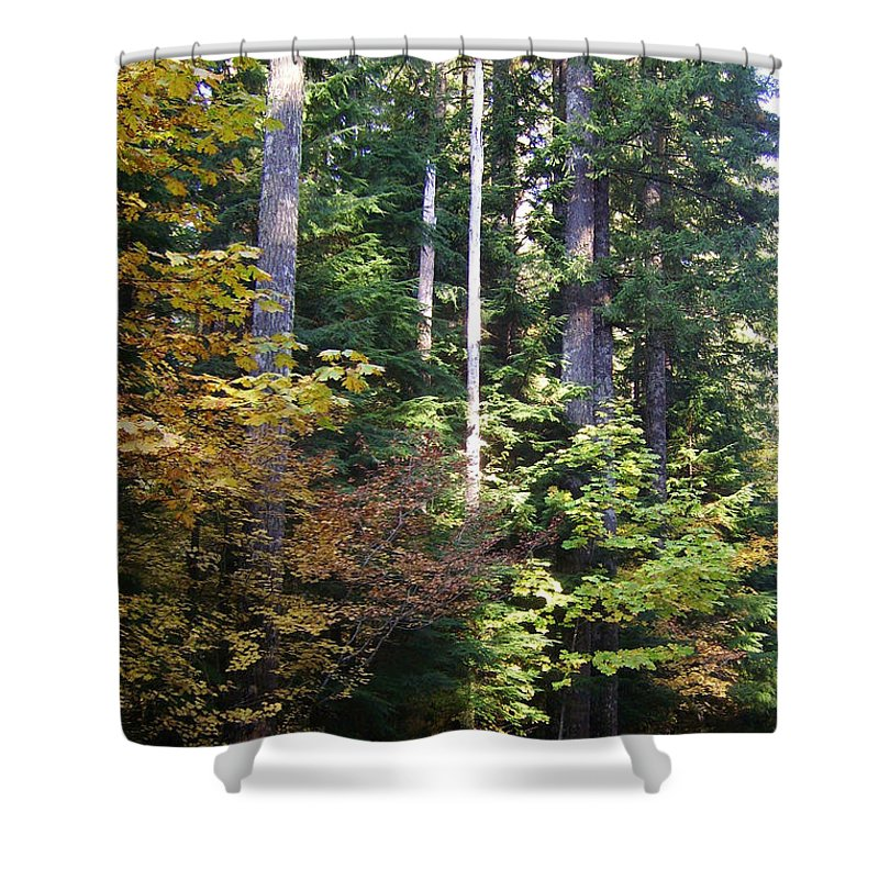 Bloom Shower Curtain featuring the photograph Autumn 8 by J D Owen