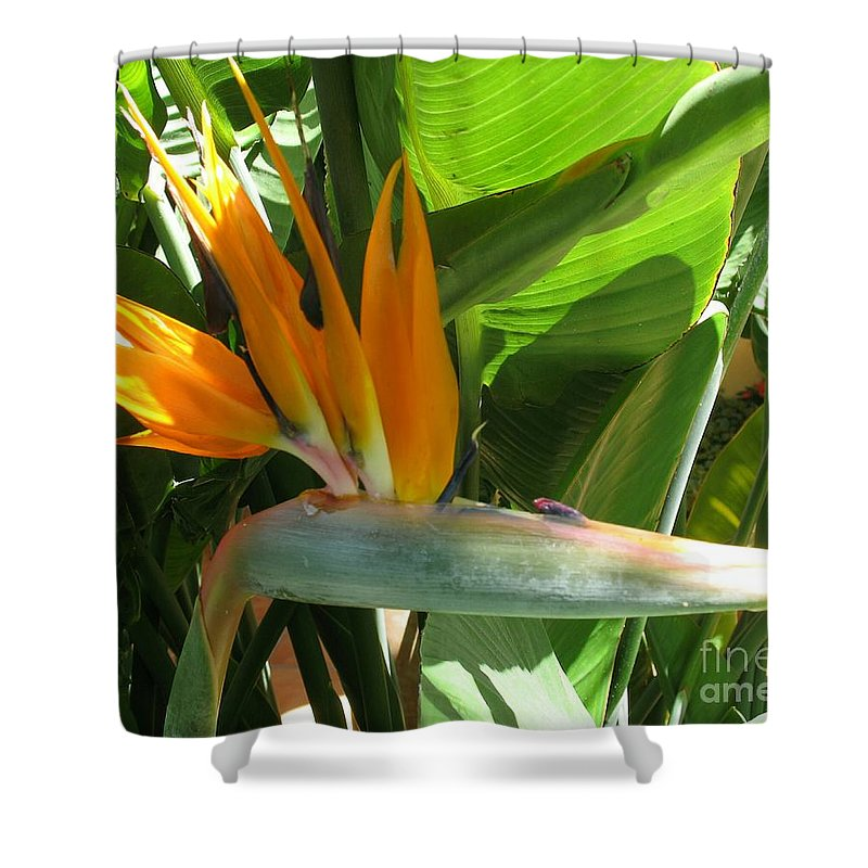 Bird Of Paradise Shower Curtain featuring the photograph Bird Of Paradise by Christiane Schulze Art And Photography