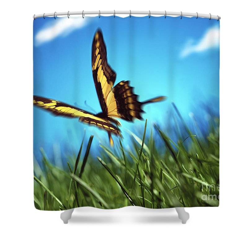 Insects Shower Curtain featuring the photograph Monarch Butterfly by Tony Cordoza