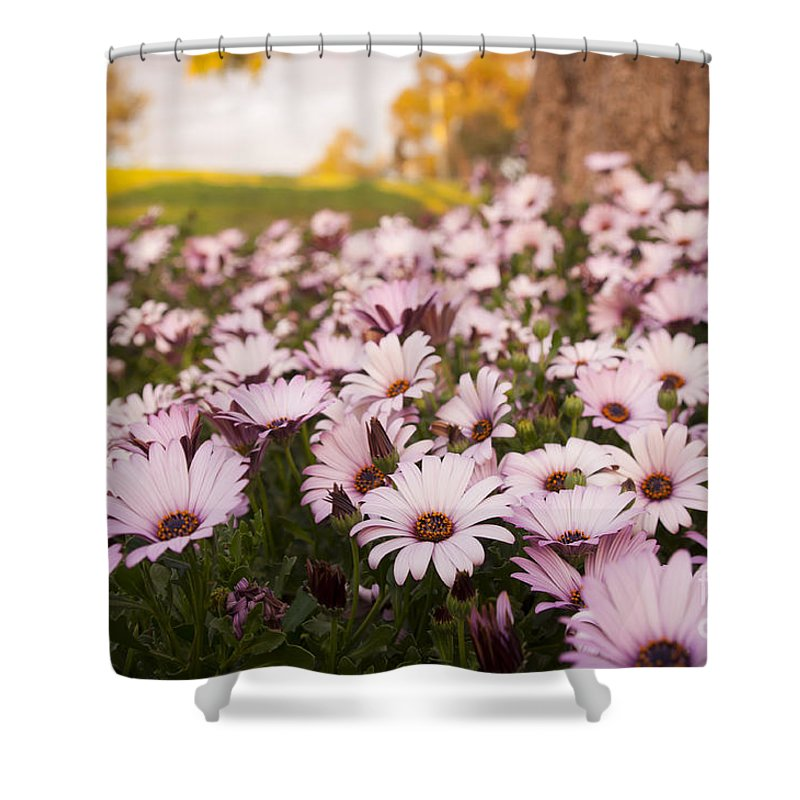 Background Shower Curtain featuring the photograph Daisies by Tim Hester