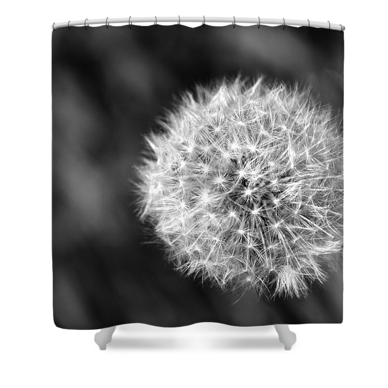 Dandelion Shower Curtain featuring the photograph Dandelion Seed Head by Chris Day