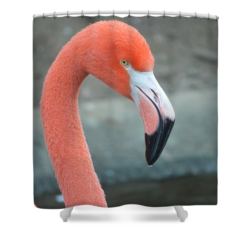 Wildlife Nature Birds  Flamingo Shower Curtain featuring the photograph Flamingo by Brad Kennedy